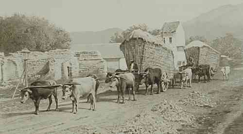 Wheat carrying in East Armenia – 1898