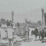 Transportation of wheat in Marash (Kermanig)