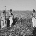 Harvesters from Van - 1904
