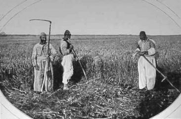 Harvesters from Van – 1904