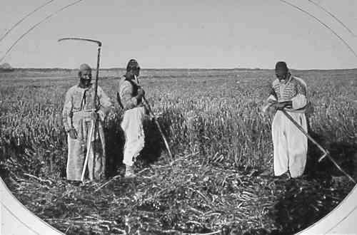 Harvesters from Van – 1904