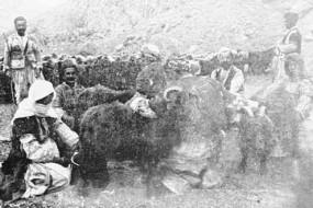 Farmers Vaspurakan
