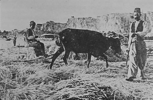 The wheat harvest – Van