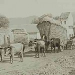 Wheat carrying in East Armenia - 1898