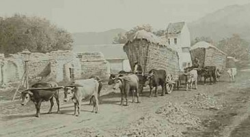Wheat carrying in East Armenia – 1898