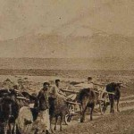 Armenian farmers in the plain of Gyumri - 1919