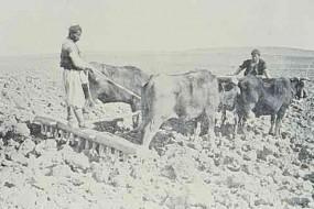Armenian plowers