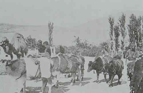 Transportation of wheat in Marash