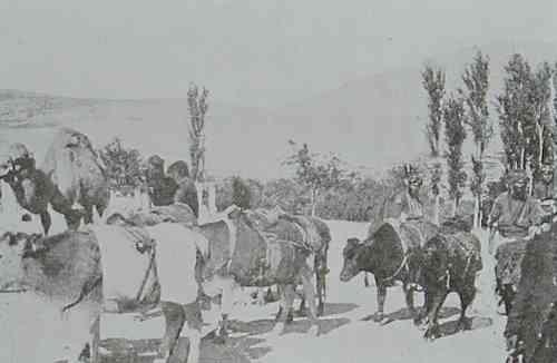 Transportation of wheat in Marash