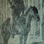 Fedayee Megerdich Roleyian (Mezho) - Mush
